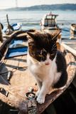 Cat on Old Boat Relaxing Royalty Free Stock Photos