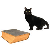 Cat and old book Stock Images