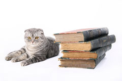 Cat with old books Royalty Free Stock Photo