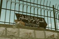 Cat in Old City in Jerusalem stock image