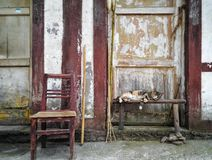 Cat before old door Stock Photos