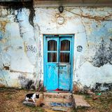 The cat and the old door stock photography