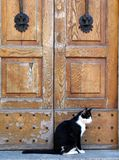 Cat and the old doors Royalty Free Stock Images