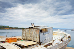 Cat on an old longboat. Evening time in the medieval town of Koroni. Cat on the fishing boat, Greece Stock Photos