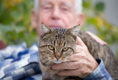 Cat in old man`s lap. Close up of cat sitting in old man`s lap and enjoying cuddling Royalty Free Stock Photo