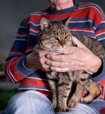 Cat in old man's lap. Cute tabby cat sitting in old man's lap. Wrinkled hands of old man holding cat Royalty Free Stock Photography