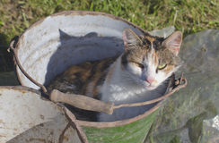 Cat in old metal bucket in farm Stock Images