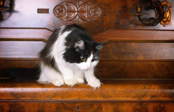 Cat on old piano Stock Photo