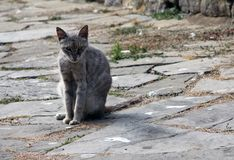 Cat on the old road Stock Photography