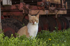 cat by old rusty disk Royalty Free Stock Image