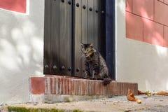 Cat of Old San Juan, Puerto Rico Stock Photos