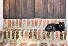 Cat of Old San Juan, Puerto Rico Stock Images