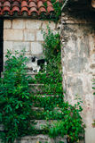 Cat on the old stairs in Perast, Montenegro. Royalty Free Stock Image