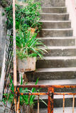 Cat on the old stairs in Perast Royalty Free Stock Image
