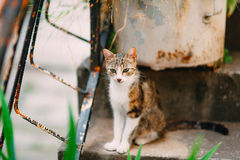 Cat on the old stairs in Perast Royalty Free Stock Photography