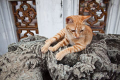 Cat on old statue Royalty Free Stock Image
