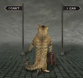 Cat is at a crossroads stock photo