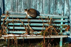 Cat. On old wooden bench on sunny winter morning Royalty Free Stock Photo