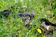 Cat& x27 olhar fixamente; olhos de s Imagem de Stock Royalty Free