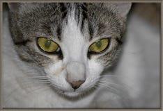 Cat& x27; olho de s Fotos de Stock