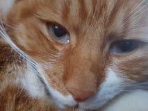 Cat Oliver Imagem de Stock