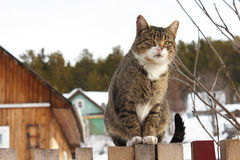 Free Cat On A Fence Royalty Free Stock Image - 26497566
