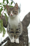 Cat On A Tree Stock Photography