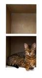 Cat On Shelf Stock Photography