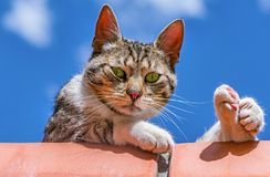 Free Cat On The Brick Fence. Stock Photography - 123939152