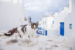 Free Cat On The Street At Mykonos, Greece Royalty Free Stock Photos - 61881768