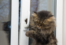 Cat opening the window Stock Photos