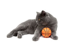 Cat with an orange ball on a white background Stock Images