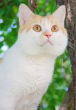 The cat with orange eyes. On the background of green foliage Royalty Free Stock Images