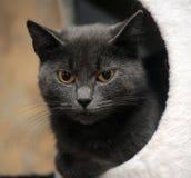 Cat with orange eyes Stock Photography
