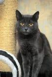 Cat with orange eyes Stock Photo