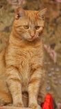 Cat with orange eyes Royalty Free Stock Photos