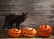 Cat with orange halloween pumpkin on wooden background. Black cat with orange halloween pumpkin on wooden background royalty free stock image