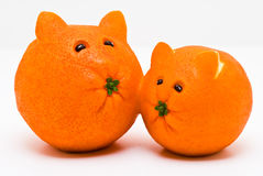 Cat Oranges Royalty Free Stock Images