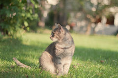 Cat in orchard Stock Images