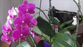 Cat with orchids stock video footage