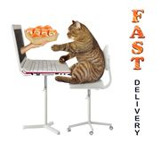 Cat orders sushi online 2. The cat makes a food order on the Internet from its computer. A hand gives him a box of sushi from laptop screen. Fast delivery. White stock photography