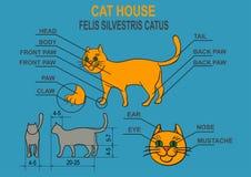 Cat ordinary home. Infographics. Stock Photo