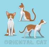 Cat Oriental Cat Cartoon Vector Illustration. Animal Character EPS10 File Format Royalty Free Stock Photos