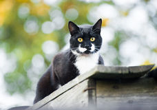 Cat outdoor Stock Photos