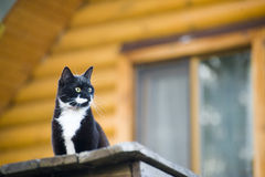 Cat outdoor Royalty Free Stock Photography