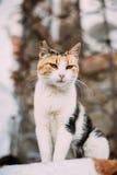 Cat Outdoor blanca y roja de la raza mezclada Imagen de archivo libre de regalías