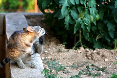 Cat Outdoor. Brown tabby cat scratching in the garden, illuminated by sunset light. Selective focus stock photo