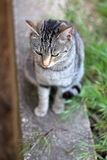 Cat Outdoor. Brown tabby cat sitting in a garden. Selective focus stock photo
