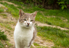 Cat outdoor in nature Stock Photos