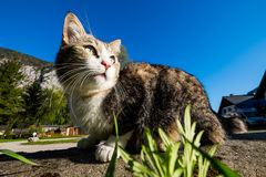Cat outdoor portrait Stock Photo